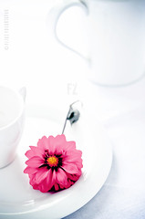 Flower and an Empty Cup :) (FijazZ) Tags: food india kitchen breakfast dish tea kerala doha qatar foodphotography directsunlight nikon50mm14d fijazz nikond7000 fijhas flowerandtea