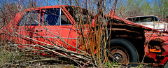 McLean's_0080 (janetliz) Tags: old cars rusty scrapyard decayed tpmg autowreckers mcleans