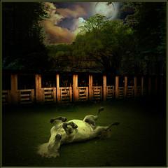 Moon bath (jaci XIII) Tags: horse moon barn forest bay stall lua floresta cavalo baia cocheira estábulo