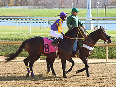2011-11-12 (14) r1 Forest G. Boyce on #8 Zanimal (JLeeFleenor) Tags: girls horses ma caballo cheval donna md photos femme uma maryland jockeys gigi frau laurel