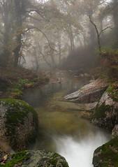 Immersed in water (Ahio) Tags: autumn trees mist portugal stream explore rivers verticalpanorama brufe parquenaturalpenedagerês smcpentaxfa31mmf18allimited vertorama pentaxk5 ríohomem