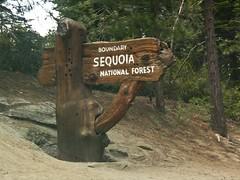 SQ-0750 (kasiahalka) Tags: california ca nationalpark sierranevada sequoianationalpark sequoianationalforest generalgranttree sequoiatree thenationschristmastree