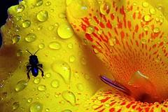 Fresh (Serlunar (tks for 6.2 million views)) Tags: flower fleur jaune flickr photos flor fresh fotos premium amarela flickrduel serlunar