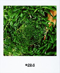 """#DailyPolaroid of 18-6-12 #263 • <a style=""""font-size:0.8em;"""" href=""""http://www.flickr.com/photos/47939785@N05/7432094598/"""" target=""""_blank"""">View on Flickr</a>"""