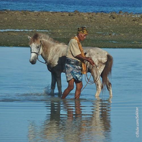 Sandelwood horse at Pantai Londolima, Waingapu, Sumba Timur