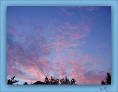 Hello Liverpool sky! (tarelkaz1) Tags: pink blue summer sky garden memories natureselegantshots naturethroughthelens sonydscs730 mygearandme