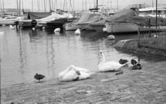 birdsandboats (Hireath Photo) Tags: bw monochrome geneva 3200 d3200 naturaclassica