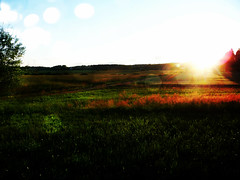 Sunset (prettylittlelife7) Tags: blue summer sun green nature farm country raingirl