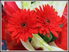A semana começa bem por aqui! (Joana Joaninha) Tags: casa amor carinho flor amizade joanajoaninha