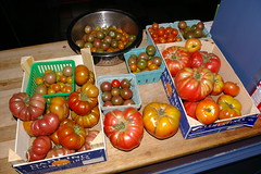 "Heirloom Tomato Harvest • <a style=""font-size:0.8em;"" href=""http://www.flickr.com/photos/54958436@N05/7779445888/"" target=""_blank"">View on Flickr</a>"