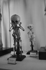 Museo di Storia Naturale Reggio Emilia (Francesco Ciavaglioli) Tags: history museum skeleton child natural bambini emilia bones museo reggio storia ossa naturale scheletro
