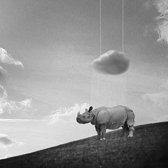 this too shall pass (Janine Graf) Tags: cameraphone cloud rain surreal rhino whiterhinoceros mobilephotography juxtaposer shockmypic touchretouch janine1968 iphone4s vfxstudio janinegraf snapseed