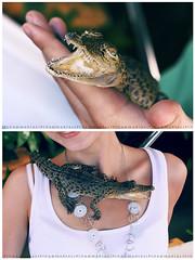 Ceylon_4852 (keesoonee) Tags: portrait 50mm bokeh alligator crocodile srilanka ceylon 2011 canon450d