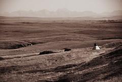 (free spirit *) Tags: sepia cattle alberta rockymountains teepee prairies range headsmashedinbuffalojump