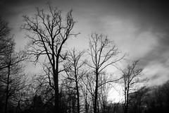 Silhouette (Anshul Roy) Tags: tree silhouette forest germany scary nikon europe blackforest fairytaleforest d3200