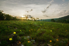 Colors of a Season (G Michael Lewis) Tags: morning sky green nature yellow clouds sunrise landscape spring scenery outdoor hills missouri wildflowers blooms naturalbeauty ozarks glade valleyviewgladesnaturalarea