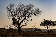 8Z1A9825-1 (wernkro) Tags: tiere landschaft swaziland sdafrika mkhaya krokor