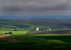The beautiful sunlight. (Louis Shum) Tags: cloud sun green nature field landscape washington olympus colfax palouse wheatfield rainnyday steptoebutte em5 m40150mm