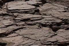 5R6K2660 (ATeshima) Tags: arizona nature havasu