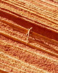 The Wave (mikerhicks) Tags: travel arizona usa southwest nature landscape geotagged outdoors photography utah spring unitedstates desert hiking wildlife adventure event backpacking wilderness kanab thewave marblecanyon onemile coyotebuttesnorth vermilioncliffsnationalmonument geo:country=unitedstates camera:make=canon exif:make=canon geo:state=arizona exif:aperture=80 exif:focallength=35mm exif:lens=1835mm exif:isospeed=100 canoneos7dmkii camera:model=canoneos7dmarkii exif:model=canoneos7dmarkii sigma1835f18dchsma geo:lat=3699630667 geo:lon=11200636000 geo:lon=11200636 geo:lat=36996306666667 geo:location=onemile geo:city=marblecanyon