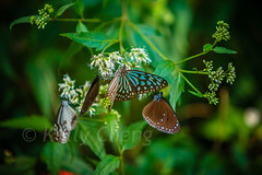Taiwan-121113-288 (Kelly Cheng) Tags: travel color colour green tourism nature animals horizontal fauna butterfly daylight colorful asia day taiwan vivid nobody nopeople colourful traveldestinations  northeastasia