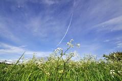 wide angle Dorset (dawn.v) Tags: uk england landscape countryside nikon may bluesky dorset wideanglelens 2016 wideangledorset