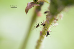 insect (SaraGalzi91) Tags: italy macro animal animals insect dream insetti macrophotography microgarden macrogarden