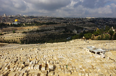 Absorbing history of Mount of Olives (Gregor  Samsa) Tags: trip november autumn vacation cemetery grave temple israel view jerusalem graves mount journey olives jewish overlook exploration viewpoint jewishcemetery templemount mountofolives