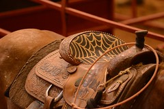Spidey Sense (Get The Flick) Tags: rodeo saddle roper georgiahighschoolrodeoassociation georgianationalfiargroundsagricenter tiedownropingcowboy