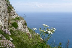 View from the Cliffpath (evakatharina12) Tags: sea cliff flower island britain outdoor panasonic sark guernsey channel fz1000