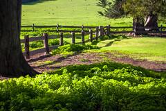 Under the tree (daniellih) Tags: sun sunlight plant tree green grass june fence landscape farm australia melbourne victoria churchill phillipisland 2016 canonbody nikonlens underthetree freelens freelensing daniellih