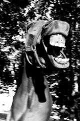 CRAZY Cautiva (Laura__0000) Tags: bw caballos campo airelibre animal animals argentina beautiful beauty blackandwhite blancoynegro bonding buenosaires candid canon connection coronelvidal countryside day daytime documenting dog día enjoy exploration explore exterior favoritas favorite female field fotografía friends fun girl horse image imagen knight life lifestyle love mascot mascota monochromatica monochrome naturallight nature noble out outdoors outside pet photo photography popular puppy rural shot togetherness wild wildlife wildlifespecies woman world happy happiness joy planetearth naturaleza natural green monocromo monocromatico pets