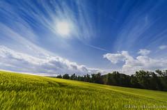 Rustic rural scenery. (PvRFotografie) Tags: blue cloud green nature yellow clouds landscape scenery groen blauw view belgium ardennen ardennes wide belgi natuur wolken wideangle uitzicht geel sigma1224mm 1224mm landschap wolk groothoek sigma12244556 sonyslta99