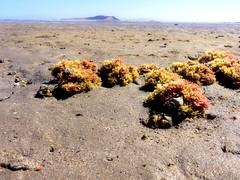 IMG_0223 filt (Tina A Thompson) Tags: sonora seashells mexico sealife seashell marinebiology tidepools seaofcortez marinelife chollabay mexicobeaches chollabaymexico