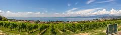 Bardolino (fadenfloh) Tags: italien italy panorama lake canon lago eos see garda di gardasee bardolino weinrebe 60d