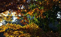 (Jori Samonen) Tags: autumn trees fall colors leaves finland helsinki colours pihlajamki