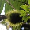PELITOS (Luzve Felice) Tags: naturaleza musgo verde green natura pelitos