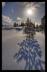Bymarka - Trondheim - Sun & Snow (vegarste) Tags: trees winter sun snow sol norway norge vinter nikon europe norwegen bluesky lensflare rays scandinavia trondheim sørtrøndelag hdr snø bymarka trær trøndelag d90 3xp photomatix blåhimmel tonemapping 3exp stråler