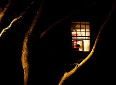 Window Fan & Branches at Night - Sunnyside, Queens (ChrisGoldNY) Tags: city nyc newyorkcity trees windows light urban usa newyork night america evening forsale artistic branches queens posters gothamist fans sunnyside curbed bookcovers albumcovers qns chrisgoldny chrisgoldberg chrisgold chrisgoldphoto chrisgoldphotos