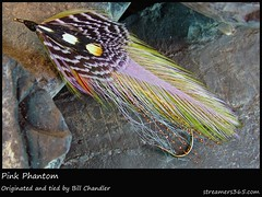 #120/365 Pink Phantom - Bill Chandler (pacres) Tags: pink fish 120 stone fly bill fishing wing olive william 365 hook phantom chandler tyer tying streamer smelt 366 hackle 365project 120365 lewispheasant junglecockfeather
