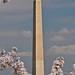 Washington Monument Shrouded