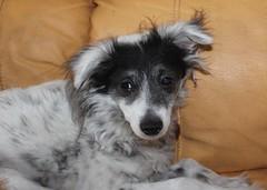 Cuatro perros, cuatro historias 2 (MGES) Tags: perros