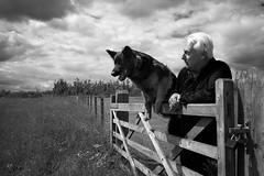Ain't No Gate High Enough (ReportageImages) Tags: england dog kent high jump gate no german aint enough trainer shepard thurnham