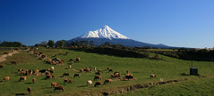 Dairy Country (Paul J's) Tags: road blue sky white mountain snow green volcano cornwall cattle cows farm moo pasture fields dairy taranaki eltham mttaranaki 120702