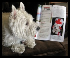 "7/12A ~ ""Published Again"" (ellenc995) Tags: magazine riley published westie july westhighlandwhiteterrier coth supershot fantasticnature ourcanada pet100 platinumheartaward rubyphotographer 100commentgroup coth5 naturallywonderful 5wonderwall 12monthsfordogs12 thesunshinegroup sunrays5"