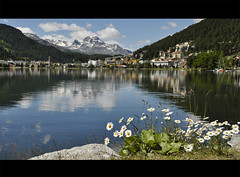 lake mountains daisies schweiz switzerland see meer... (Photo: *Lie ... on & off ... too busy ! on Flickr)