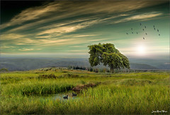 Green Dream (Jean-Michel Priaux) Tags: tree green nature photoshop painting landscape alone alsace paysage hdr priaux mygearandme