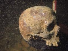 German Sub Skull WWII (historicalbodies) Tags: germany soldier army skull head military wwii battle worldwarii ww2 sailor submerged combat worldwar2 1900s
