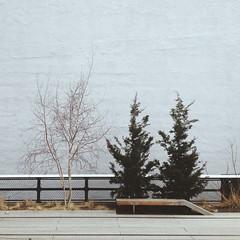 (EllisJohns92) Tags: road new york city nyc trees sky 6x6 square high manhattan hipster medium format minimalist edit highline 1x1 vsco instagram vscocam uploaded:by=flickrmobile flickriosapp:filter=nofilter highttrail