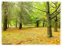 Week 13: Mother Earth (EXPLORED) (Lyndon (NZ)) Tags: autumn newzealand nature outdoors fuji seasons gimp masterton wairarapa henleylake xs1 week13theme fujifilmxs1 gigatownmtn 52weeksthe2014edition week132014 weekstartingwednesdaymarch262014